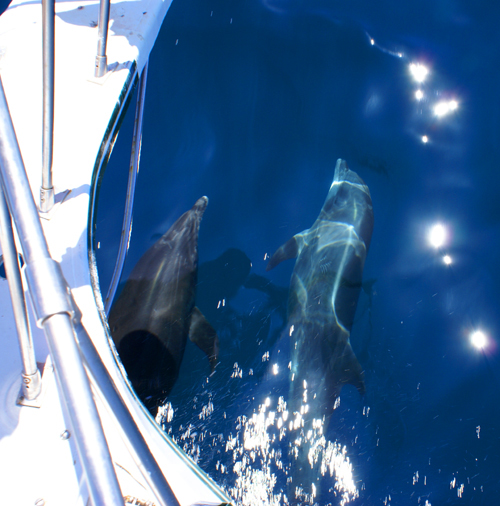 Dolphins_and_Boat